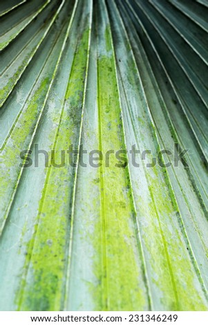 Palms leaves background in nature