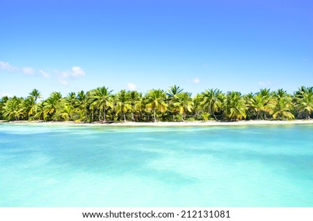 Palms on a beach in the Caribbean. - stock photo