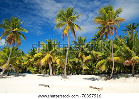 Palms on caribbean beach