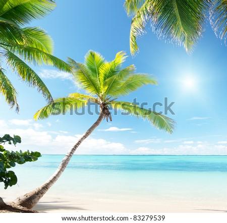 palms on Caribbean beach - stock photo