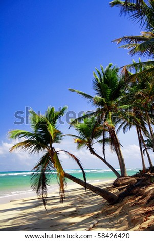 Palms on caribbean beach, Dominican Republic - stock photo