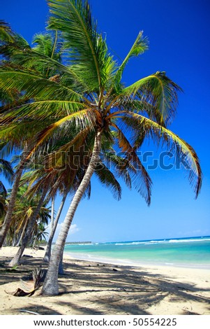 Palms on caribbean beach with white sand - stock photo