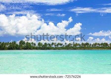 Palms on caribbean sea coastline, Saona - stock photo