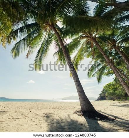 Palms on the beach - stock photo