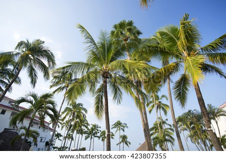 Palms on the beach, Mexico