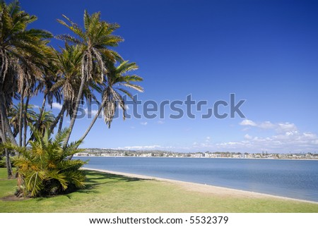 Palms on the beach of Mission Bay, San Diego, California. - stock photo