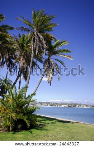 Palms on the beach of Mission Bay, San Diego, California (portrait orientation). - stock photo