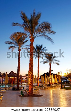 Palms on the sky background - stock photo