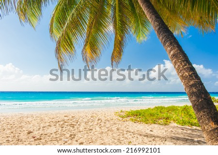 Palms on the white beach and a turquoise sea on a Caribbean island of Barbados - stock photo