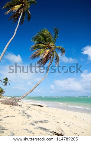 Palms on tropical beach, caribbean nature - stock photo