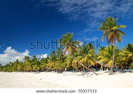 Palms on tropical beach on caribbean sea - stock photo