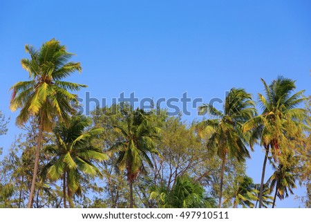 Palms over blue sky during sunny day, Zanzibar, Tanzania