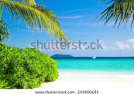 Palms Overhanging Island Lagoon  - stock photo
