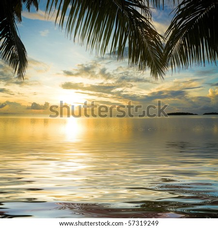 Palms overhanging the sunset waters - stock photo