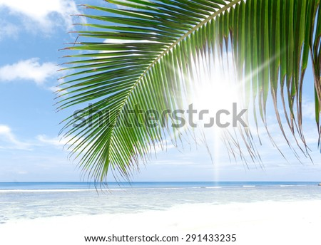 Palms Overhanging Under Trees  - stock photo