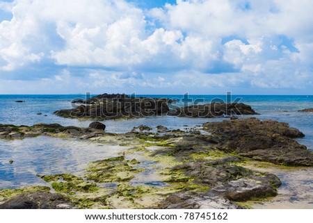 Palms Panorama Dream - stock photo