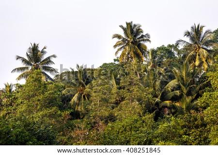 Palms tree - stock photo