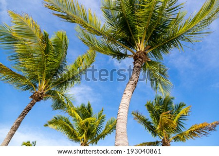 Palms tree in a beautiful caribbean beach in Key West, Florida. - stock photo