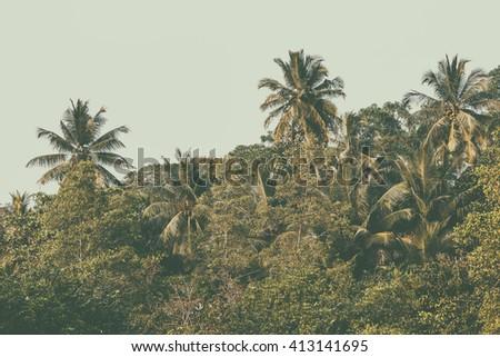 Palms tree, jungle. Instagram effect (vintage) - stock photo
