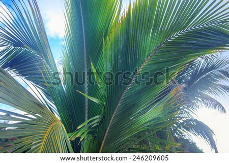 Palms tree's leaves over blue sky - stock photo