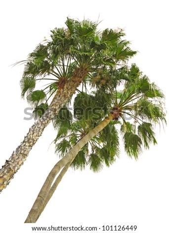 palms trees - stock photo