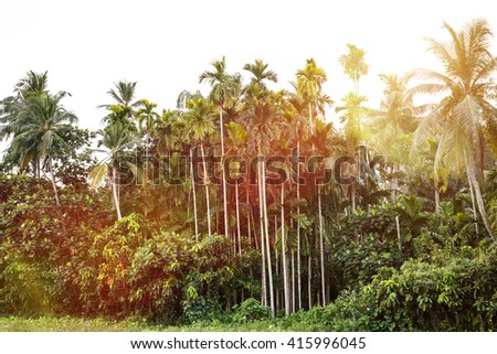 Palms trees.  - stock photo