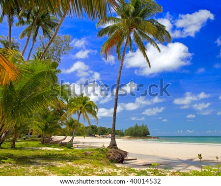 Palms trees forest near water on the beach with tropical nature, summer holiday, travel background - stock photo