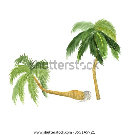 palms watercolor  illustration