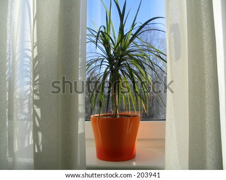 Palmtree - stock photo