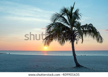 Palmtree at Palm Beach in Aruba at sunset in the Caribbean - stock photo
