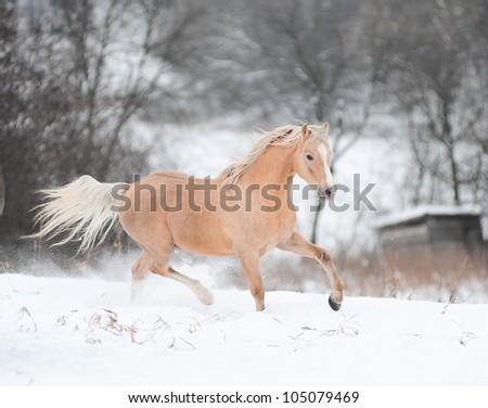 palomino pony in winter - stock photo