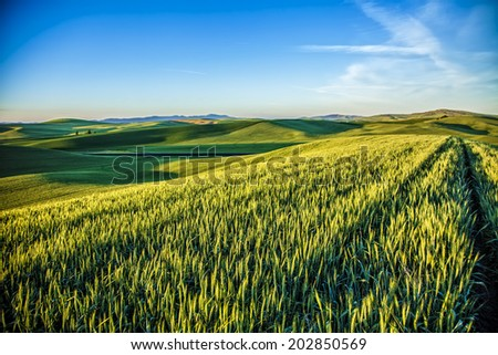 Palouse fields in sunset   - stock photo