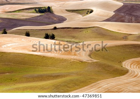 Palouse Hills crop fields at harvest time, Washington state