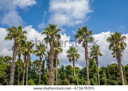 pam trees in blue sky