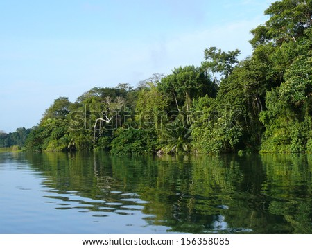 PANAMA CHANNEL AREA, PANAMA, DECEMBER 8 2006. A thick stretch of forest in the shore of the Panama Channel, on December 18th 2006.  - stock photo
