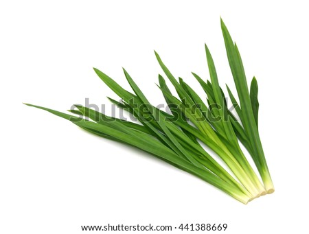 Pandanus amaryllifolius isolated on white background