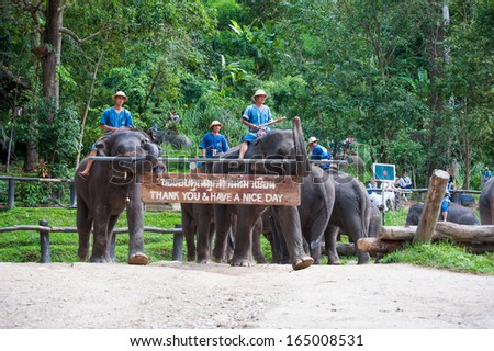 Pang Chang, Chiang Mai, THAILAND - NOV 15: Elephants doing parade with thank you sign in elephant circus show on 15 November 2013 at Chiang Mai, Thailand