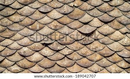 pangolin scales similar armadillo pangolin covered stock photo edit