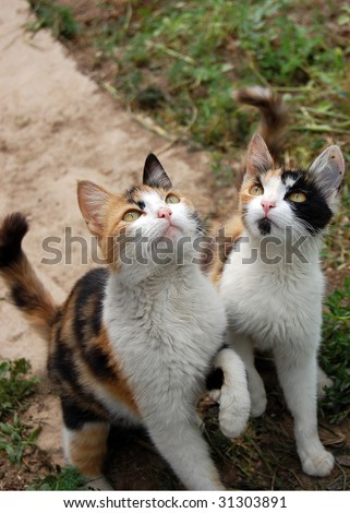 Panhandlers. Two domestic cats - stock photo