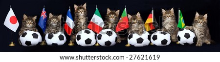 Pano panorama collage of 7 cute Maine Coon kittens on black background, with different country flags and soft miniature soccer balls - stock photo