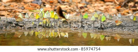 Panorama butterfly. - stock photo