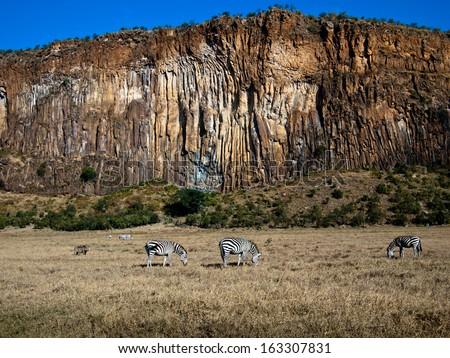 Panorama canyon with three zebras - stock photo