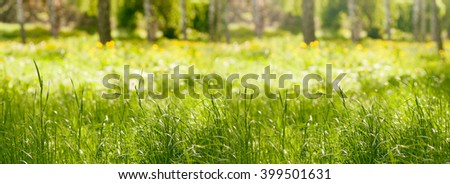 panorama grass in the forest in the spring - stock photo