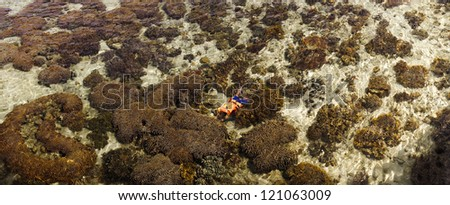Panorama image of an unidentified man takes images of underwater coral - stock photo