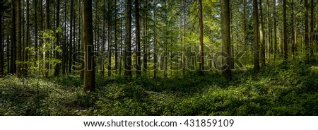 panorama in a dense forest with rays of light