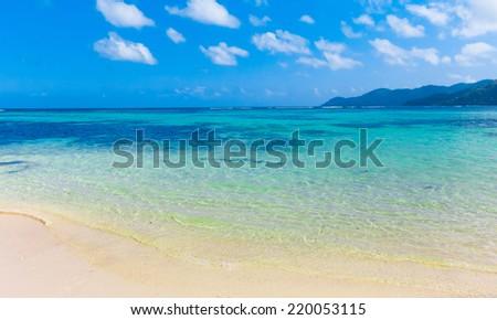 Panorama Jungle Summertime  - stock photo