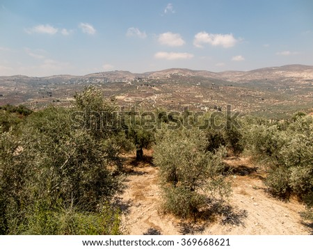 Panorama land around Sebastia in Samaria, Israel. Olive trees and other, shrubs, buildings