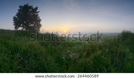 Panorama landscape early morning of August with a single oak tree by the lake with fog, high grass with dew and spider - stock photo