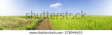 Panorama Landscape of green barley field and horizon with clear sky in Gapado Island of Jeju Island in Korea. - stock photo