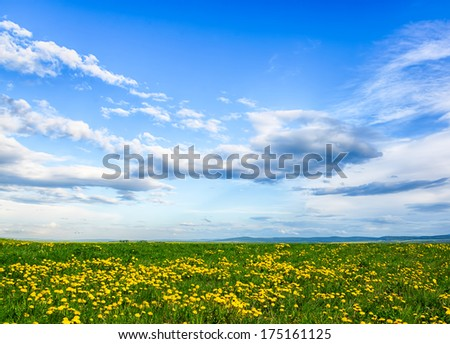 Panorama of a meadow with a wildflowers and the blue sky